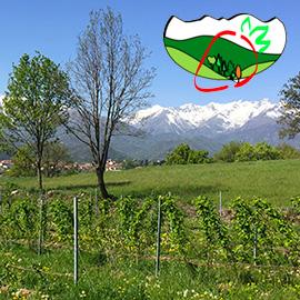 """Alla scoperta dei """"Piccoli frutti della Val Sangone"""""""
