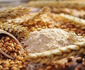 Il grano agli albori