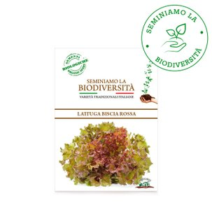 Semi Bio Lattuga Biscia Rossa 2g