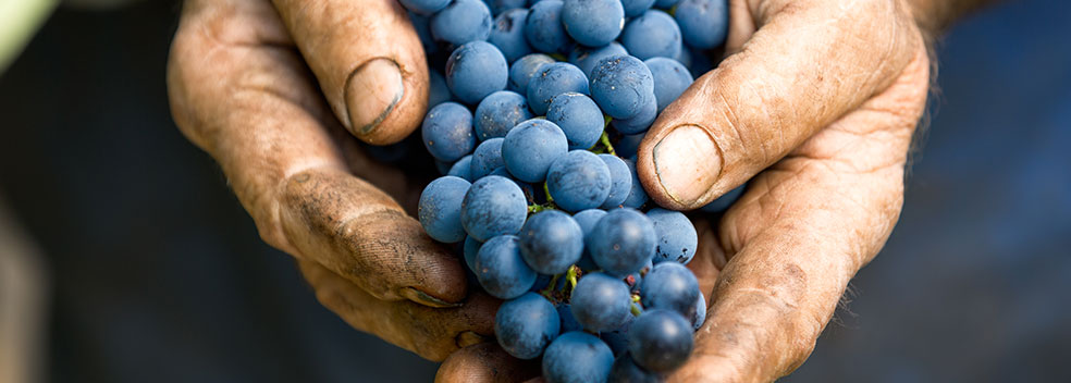 Gli artigiani del vino
